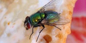 Repelente contra moscas