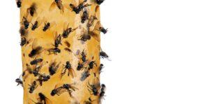 Remedios Caseros para eliminar criaderos de moscas